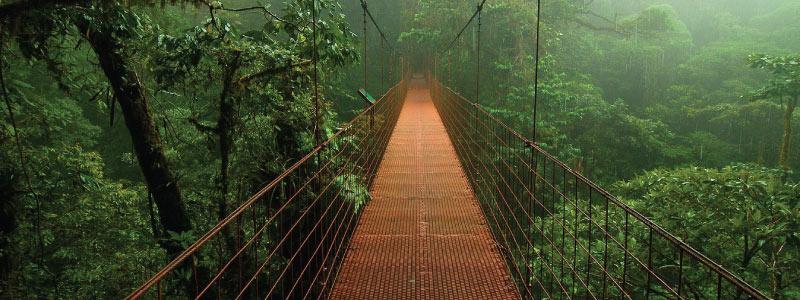 La-forêt-de-nuages-de-Monteverde