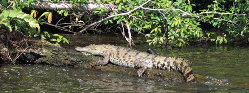 Parc-National-Tortuguero
